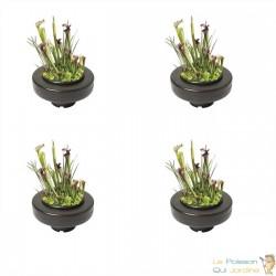 Lot de 4 Paniers flottants 22 cm de diamètre pour plantes de bassins de jardin et étangs