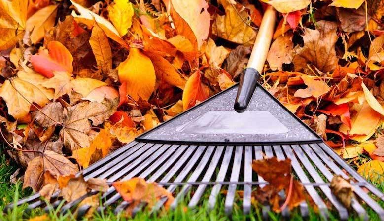 Que faire pour son jardin durant l'automne ?